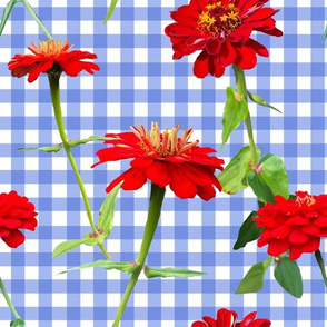Zinnia Picnic French Blue