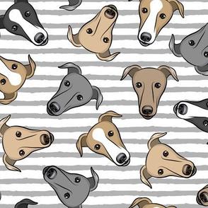 greyhounds - grey stripes - greyhound dog breed face - LAD19