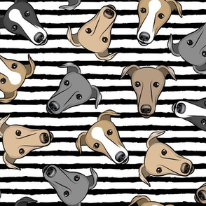 greyhounds - black stripes  - greyhound dog breed face - LAD19