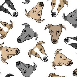 greyhounds - white - greyhound dog breed face - LAD19