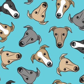 greyhounds - blue - greyhound dog breed face - LAD19