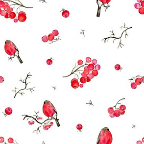 Bullfinch on rowanberry