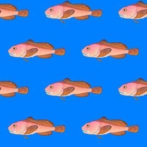 blobfish on deep blue