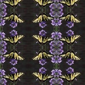 YellowSwallowtailOnDame'sRocket