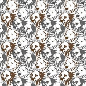 Dalmatian portrait pack