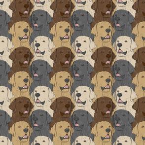 Labrador Retriever portrait pack