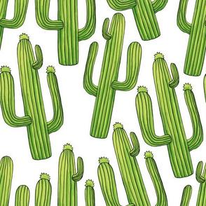 Cacti Cactuses