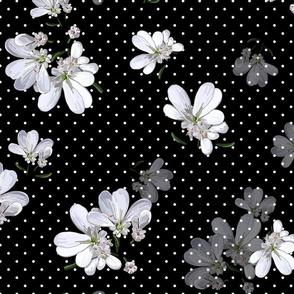 Coriander Flowers | Black  |  White Polka Dots