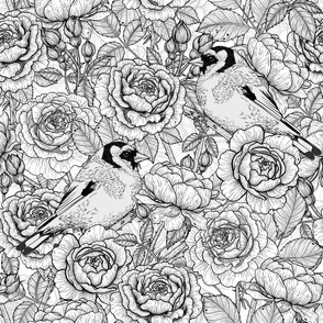 Rose flowers and goldfinch birds, b&w