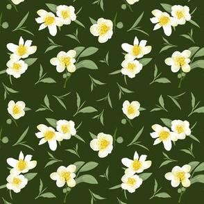 tea blossoms on dark green
