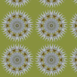 Orchid Sunray Kaleidoscope