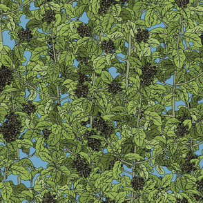 Akiraho Olearia on dinosaur blue