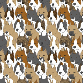 American Staffordshire Terrier portrait pack