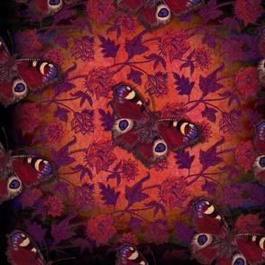 peacock eye dark blush
