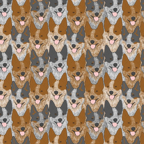 Australian cattle dog portrait pack