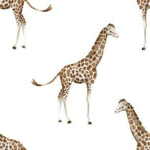 """8"""" Giraffe Print"""