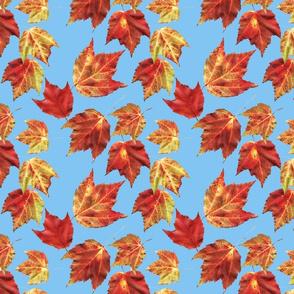 bobbies leaves floating 8x8 blue