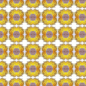 sunflower_6