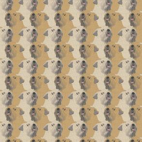 Soft coated Wheaten Terrier portrait pack