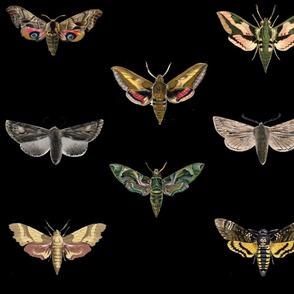Black Moths
