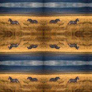 Zebra in the golden grass