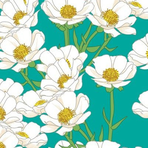 Mount Cook Buttercup Flowers on Teal