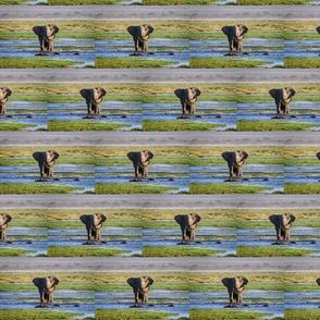 elephant water cruising
