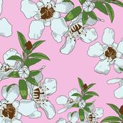 Manuka Flowers on Pink