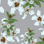 Manuka Flowers on Grey