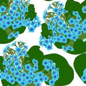 Chatham Island Forget-Me-Not Flowers & Leaves on White