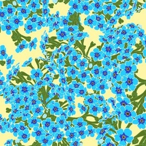 Chatham Island Forget-Me-Not Flowers on Yellow