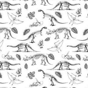 "4"" Dino Fossils Sketch"