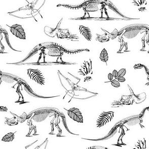 "8"" Dino Fossils Sketch"