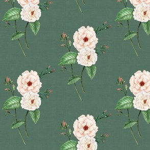 Roses Soft Peach Vintage Green