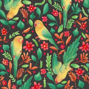Parakeet pattern