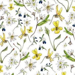 RachelsWildflowers
