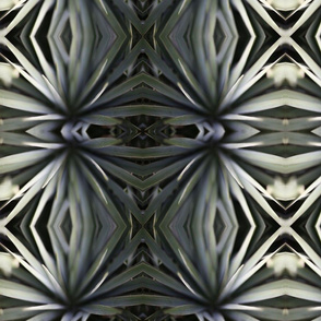 Abstract Agave