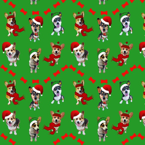 Christmas Corgis on Green