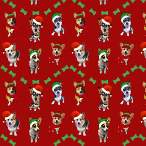 Christmas Corgis on Red