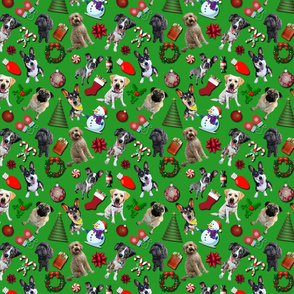 Christmas Dogs on Green