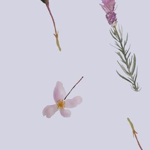 English Country Garden Lilac