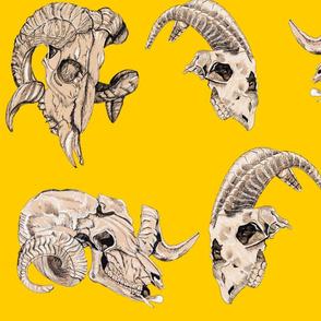 Yellow Animal Skulls