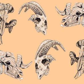 Peach Animal Skulls