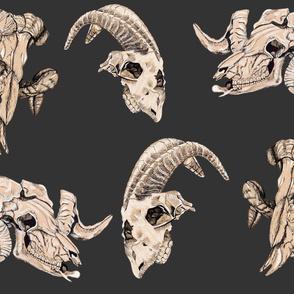 Dark Grey Animal Skulls
