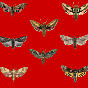 Red Moths
