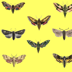 Pastel Yellow Moths