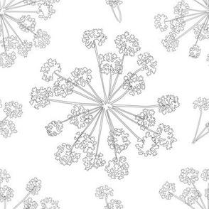 Floral Queen Anne's Lace Monochrome