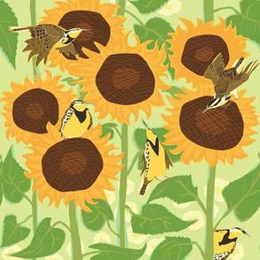 Sunbathing Meadowlarks
