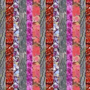 autumn stripe red maple pink mums tree bark