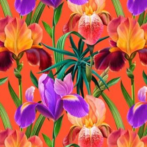 Colorful irises in a tropical garden